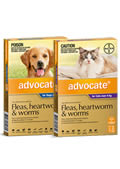 Advocate treatment for fleas, heartwom, lice, ear mites, sarcoptes (scabies) mites,roundworm, hookworm and whipworm