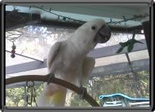 Cheap Flea Treatment for Dogs