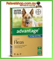 Advantage Blue Large Dogs 6 Month Pack