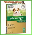 Advantage Green Puppies 6 Month Pack