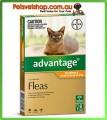 Advantage Orange Small Cats 6 Month Pack