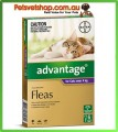 Advantage Purple Large Cats 6 Month Pack