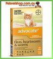 Advocate for Small Cats Orange 6 Pack