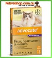 Advocate for Large Cats Purple 6 Pack